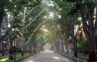 7 Things You Should Know About Walking On Locust Walk